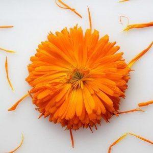 marigold organic ingredient